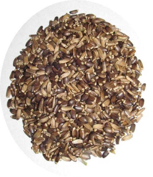 Семена растопши 1 кг