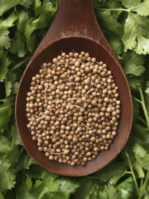 Кинза семена 1 кг